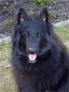 Akira vom Schatten der mir folgt